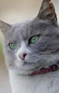 Смотреть фильм Город кошек Турция